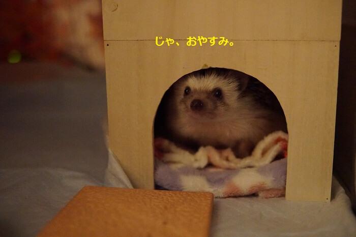 f:id:chikojirou:20161017213559j:plain