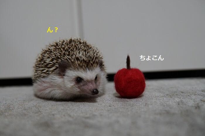 f:id:chikojirou:20161017213619j:plain