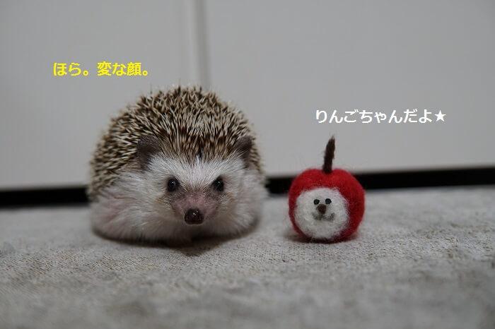 f:id:chikojirou:20161017213639j:plain
