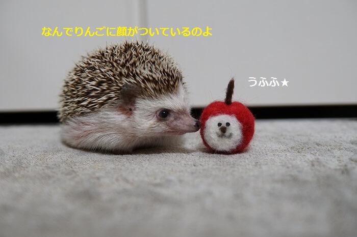 f:id:chikojirou:20161017213648j:plain