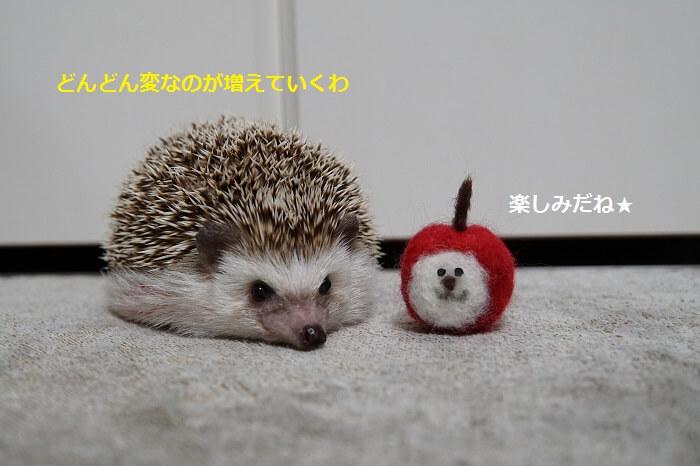 f:id:chikojirou:20161017213658j:plain