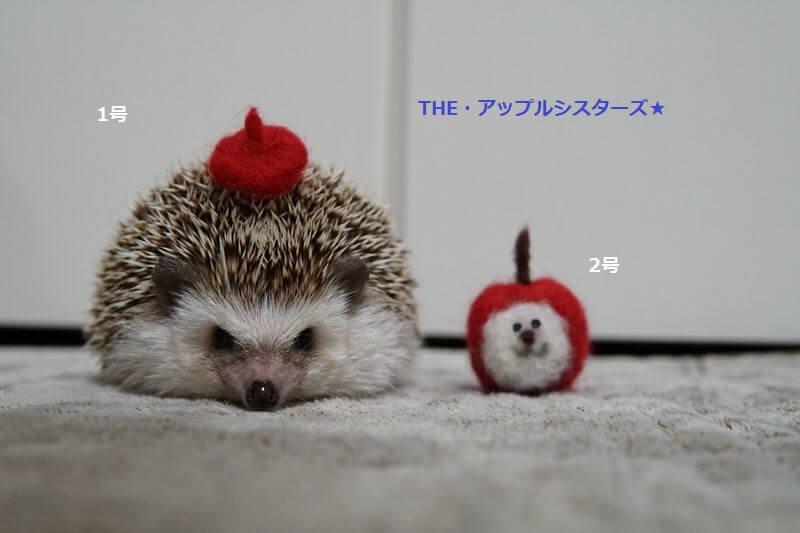 f:id:chikojirou:20161018213436j:plain