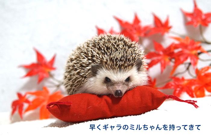 f:id:chikojirou:20161026213604j:plain