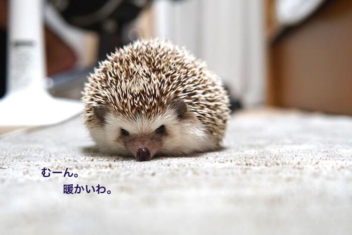 f:id:chikojirou:20161027214401j:plain