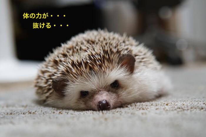 f:id:chikojirou:20161027214409j:plain