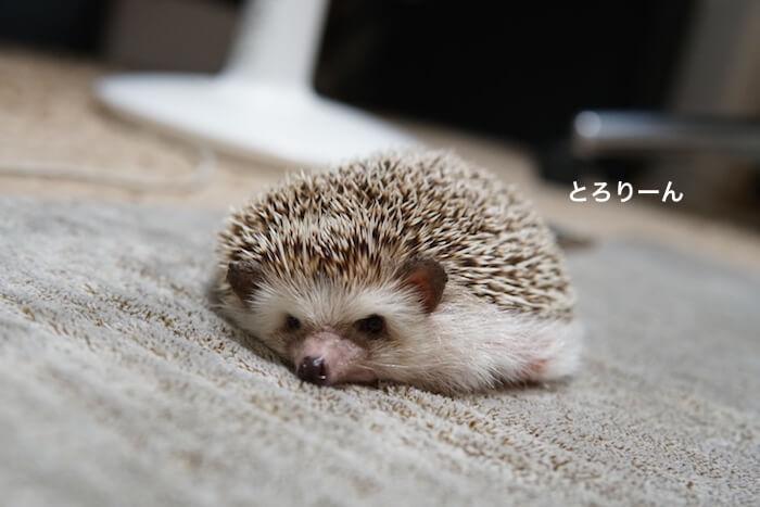 f:id:chikojirou:20161027214421j:plain