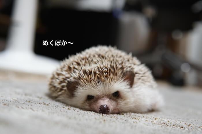 f:id:chikojirou:20161027214429j:plain