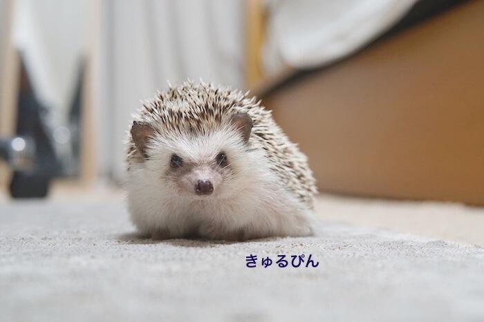 f:id:chikojirou:20161028212857j:plain
