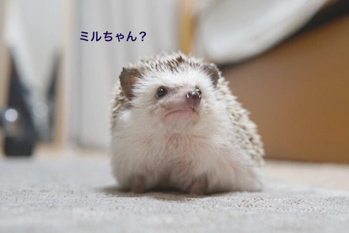 f:id:chikojirou:20161028212909j:plain