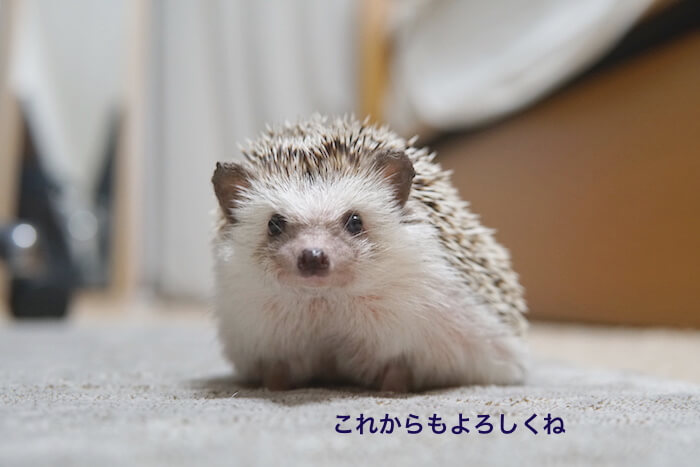 f:id:chikojirou:20161028212925j:plain