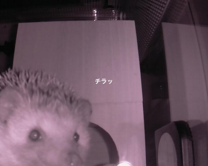 f:id:chikojirou:20161105211740j:plain