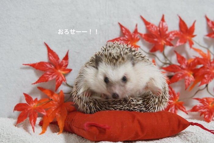 f:id:chikojirou:20161108213958j:plain