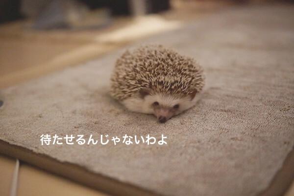 f:id:chikojirou:20161112131016j:plain