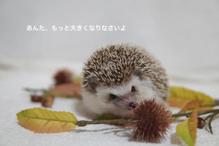 f:id:chikojirou:20161116214831j:plain