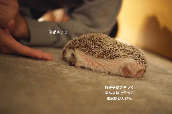f:id:chikojirou:20161122220433j:plain