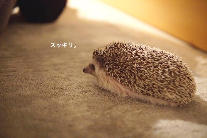f:id:chikojirou:20161122220635j:plain