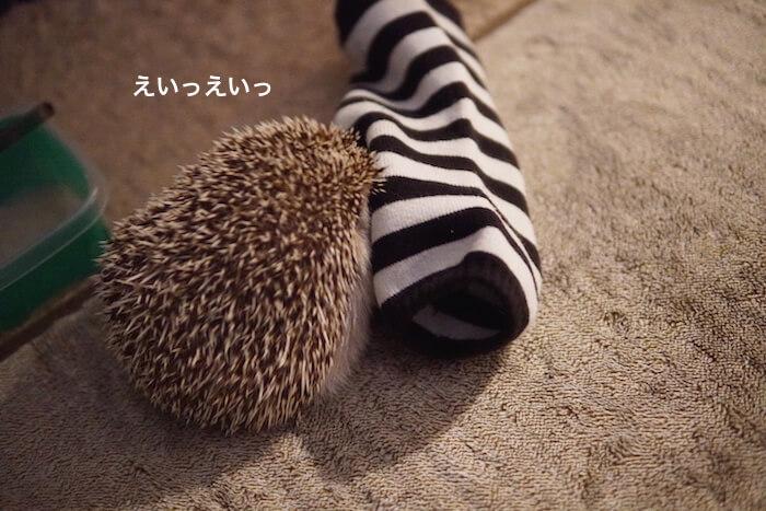f:id:chikojirou:20161124220520j:plain