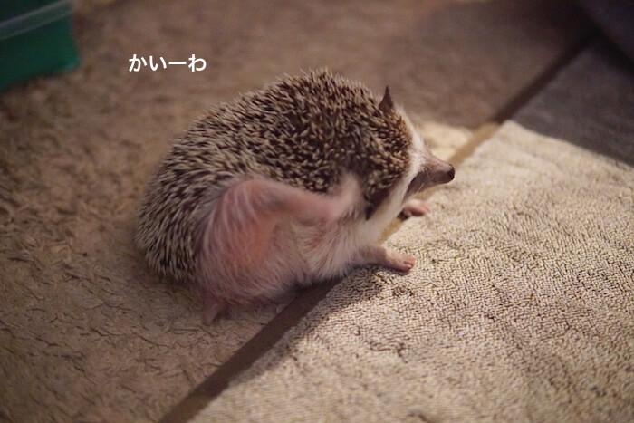 f:id:chikojirou:20161124220536j:plain