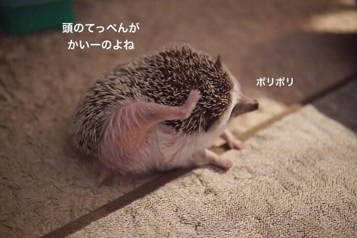f:id:chikojirou:20161124220544j:plain