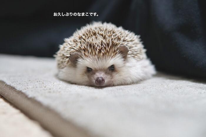 f:id:chikojirou:20161204204403j:plain