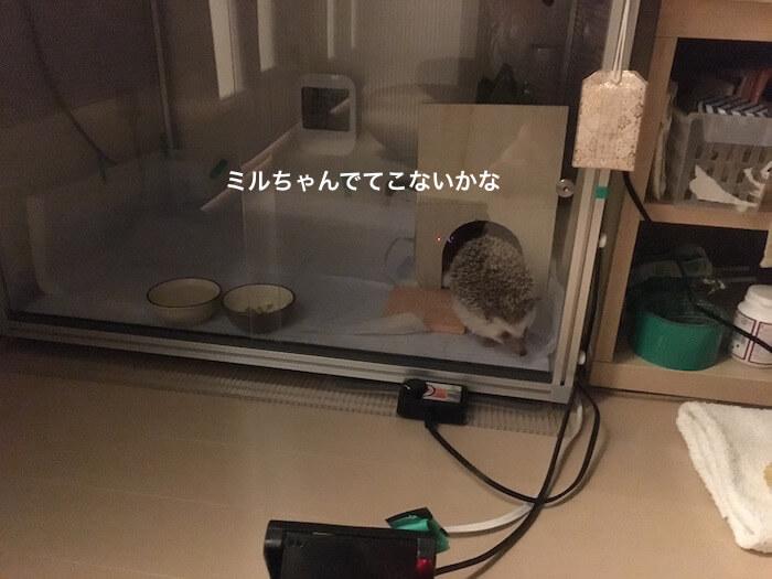 f:id:chikojirou:20161208205103j:plain