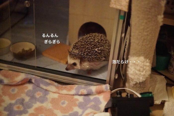 f:id:chikojirou:20161213215621j:plain
