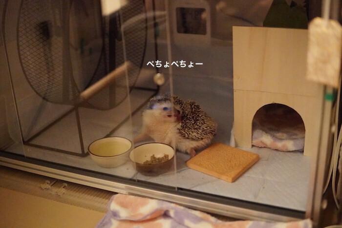 f:id:chikojirou:20161213215708j:plain