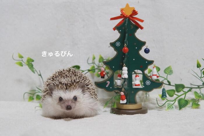 f:id:chikojirou:20161216215603j:plain