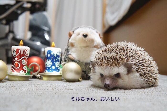 f:id:chikojirou:20161219220833j:plain