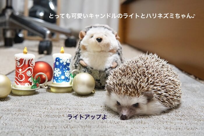 f:id:chikojirou:20161219220842j:plain