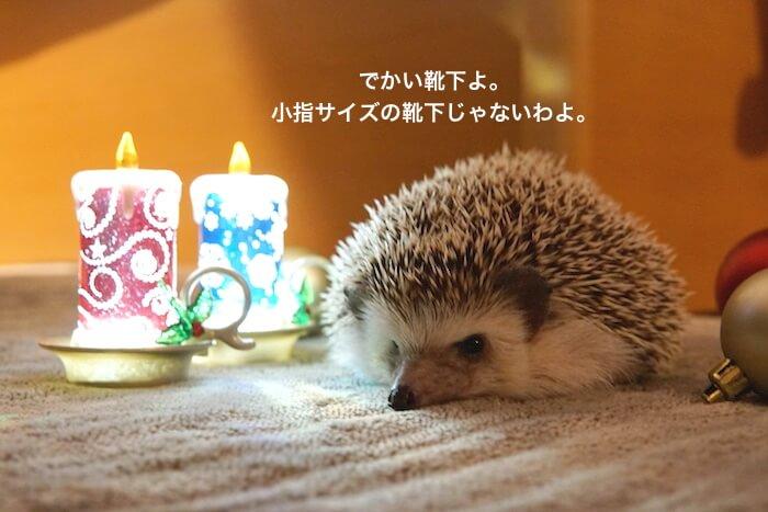 f:id:chikojirou:20161219220912j:plain