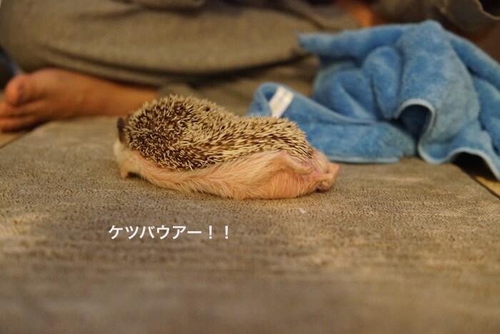 f:id:chikojirou:20161229143608j:plain