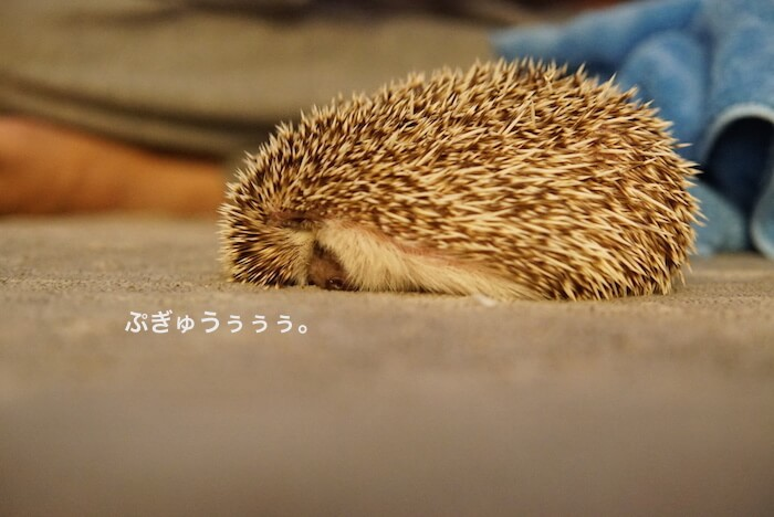 f:id:chikojirou:20161229143632j:plain