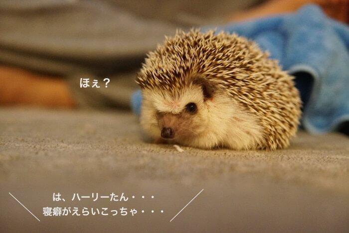 f:id:chikojirou:20161229143654j:plain
