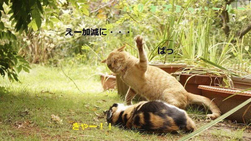 f:id:chikojirou:20161229152846j:plain