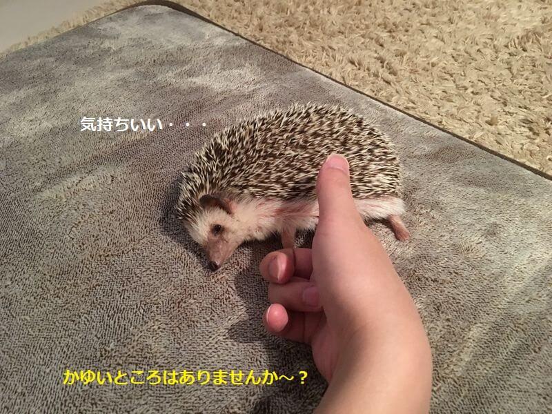 f:id:chikojirou:20161229152901j:plain