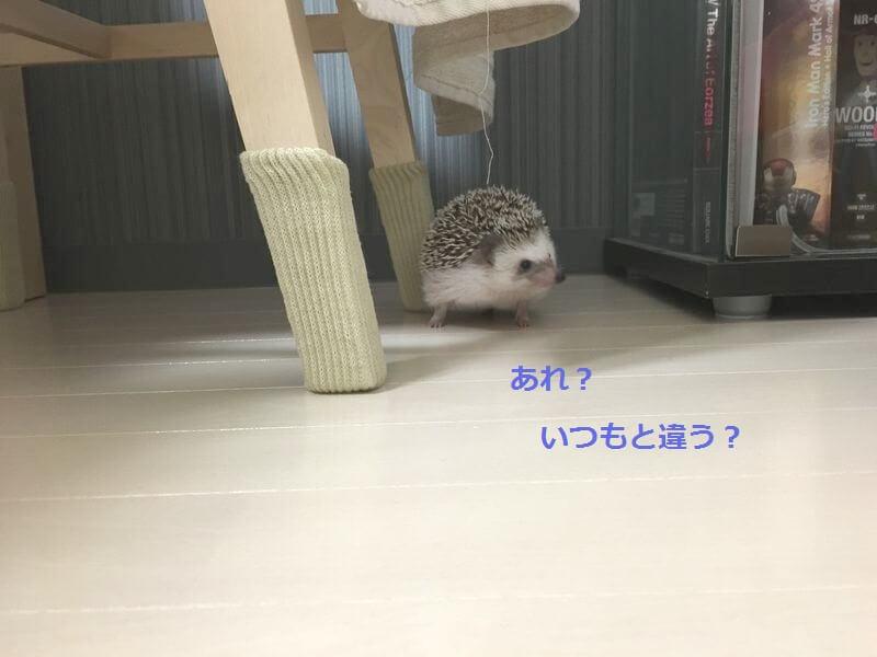 f:id:chikojirou:20161229153405j:plain