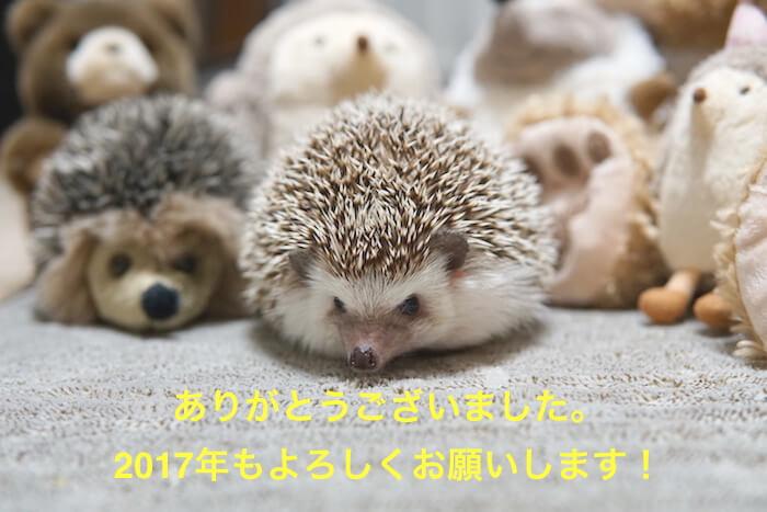 f:id:chikojirou:20161230121411j:plain