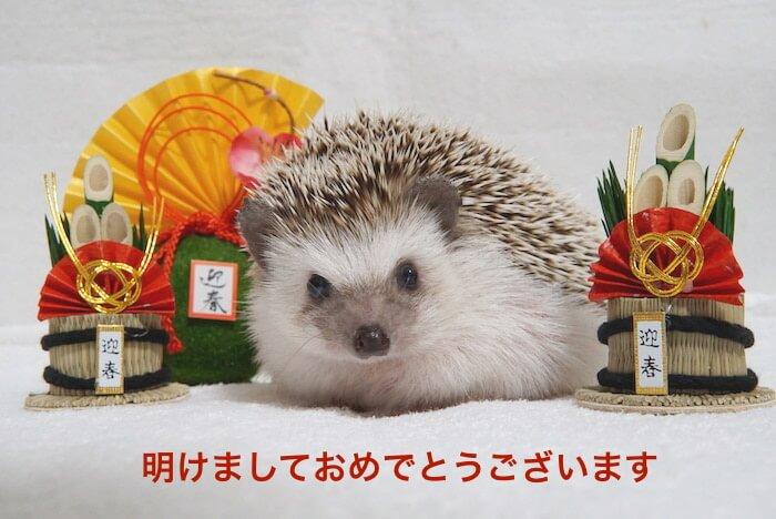 f:id:chikojirou:20161231130737j:plain