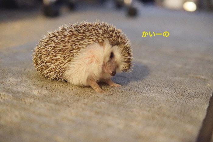 f:id:chikojirou:20170103121430j:plain
