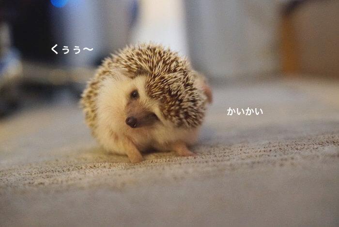 f:id:chikojirou:20170103121438j:plain
