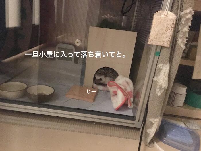 f:id:chikojirou:20170103121506j:plain