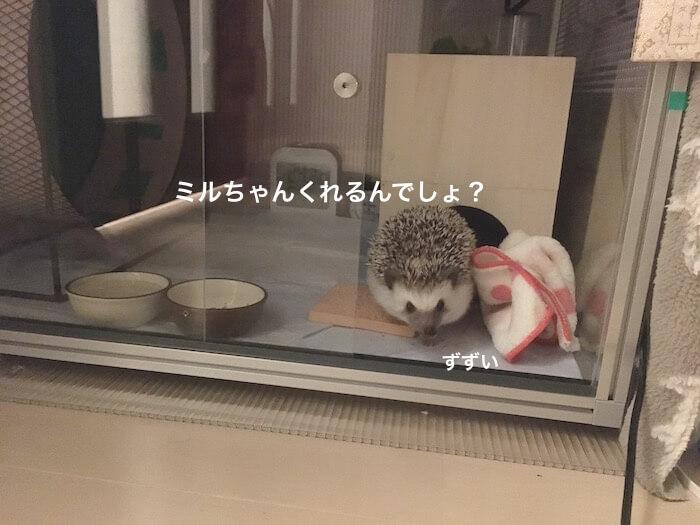 f:id:chikojirou:20170103121515j:plain