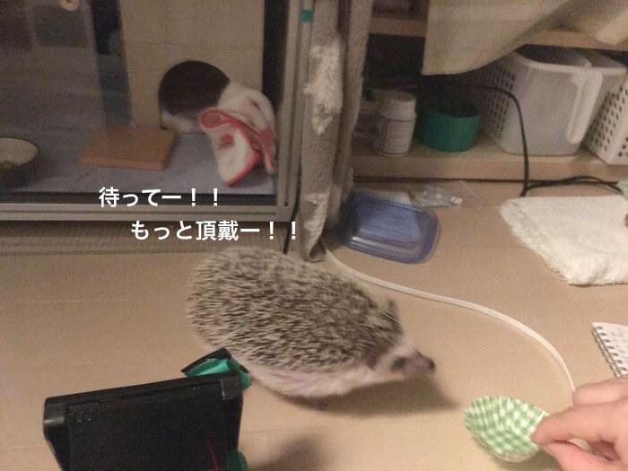 f:id:chikojirou:20170103121550j:plain
