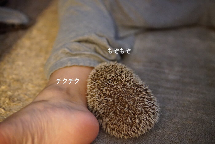 f:id:chikojirou:20170105210801j:plain