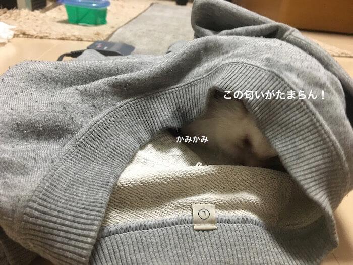 f:id:chikojirou:20170107215127j:plain
