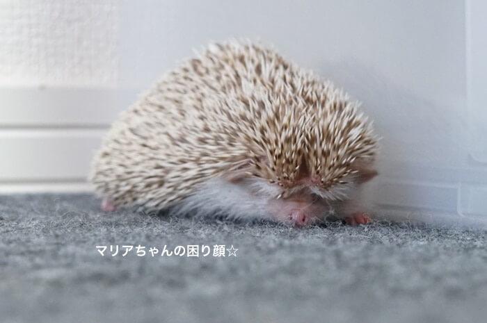f:id:chikojirou:20170109213939j:plain