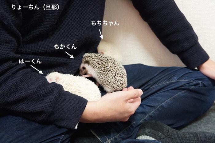 f:id:chikojirou:20170109213950j:plain