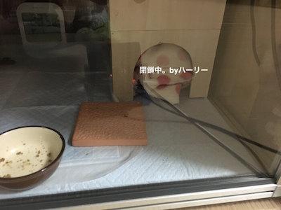 f:id:chikojirou:20170110213238j:plain