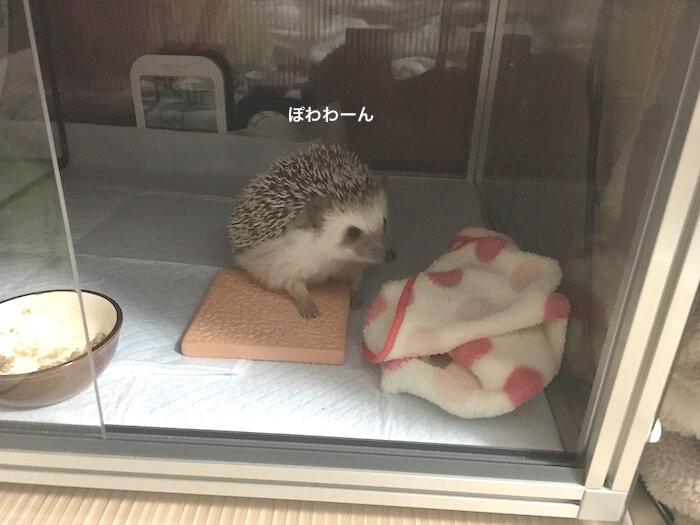 f:id:chikojirou:20170110213252j:plain